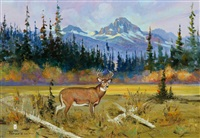glacier park deer by ace powell