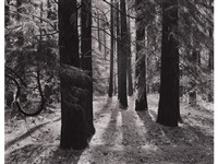 forest floor, yosemite valley, california by ansel adams