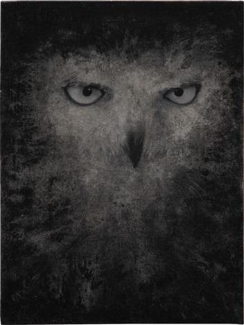 snowy owl by david noonan