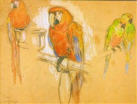 perroquets et perruches by jean de lafontinelle