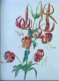 lilium tigrinum by rodolphe koechlin