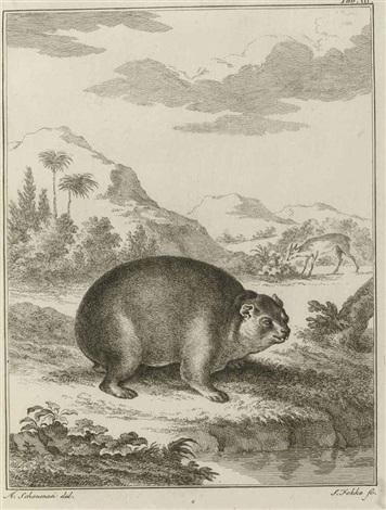 miscellanea zoologica quibus novae imprimis atque obscurae animalium species describuntur bk w14 works 4to by peter simon pallas