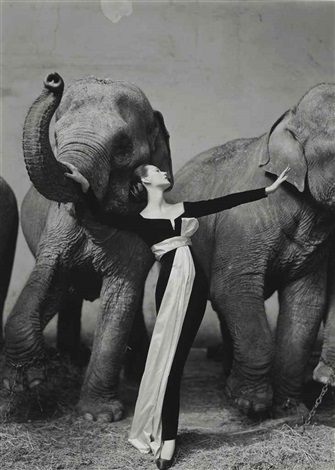 dovima with elephants evening dress by dior cirque dhiver paris august by richard avedon