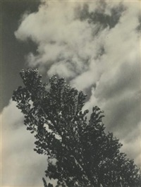 song of the sky and trees by alfred stieglitz