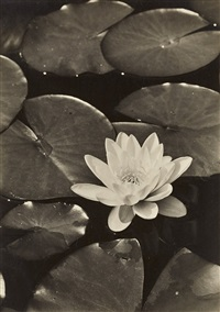 untitled (water lilies) by max baur