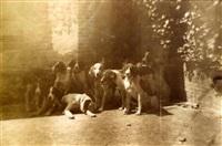 meute de chiens de chasse by louis (comte du manoir) roger du val