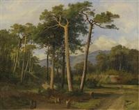 pins dans la forêt de finges by alexandre calame