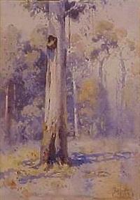 gum trees by theodore penleigh boyd