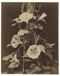 etudes de fleurs (set of 4) by charles aubry