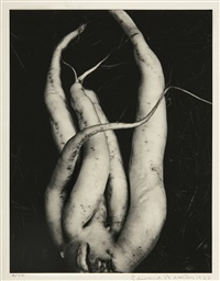 white radish by edward weston