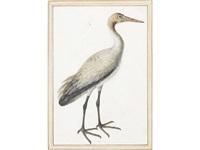 study of a juvenile crane (gruidae) by vincenzo leonardi