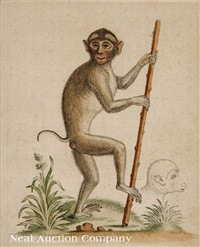 orangutan and pig tailed monkey (2 works) by george edwards
