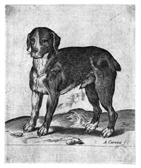 cane by agostino carracci
