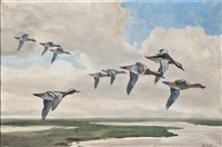 garganey in flight by peter markham scott