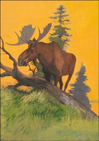 sunset moose by robert wesley amick