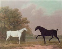 a grey and a chestnut stallion in a field by richard polydore nodder
