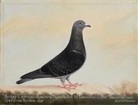 Pair of portraits of racing pigeons, 'Darkey , 1933