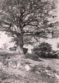 une allee, deux arbres by g. arosa