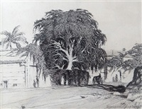 moreton bay fig tree, milton road, brisbane by lloyd frederic rees