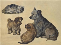 a terrier with her puppies and a kitten by sir edwin henry landseer