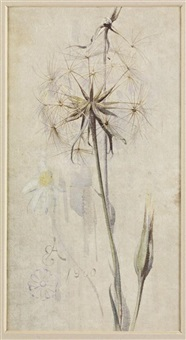 goat's beard in seed (+ 2 others; 3 works) by edwin john alexander