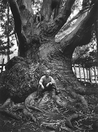 redwood grove, northern california by ansel adams