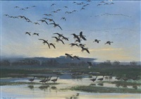 pinkfeet arriving in the blue of the dawn by peter markham scott