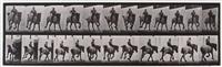 hansel, gallop bareback, belgian draught horse, plate 629 (from animal locomotion) by eadweard muybridge