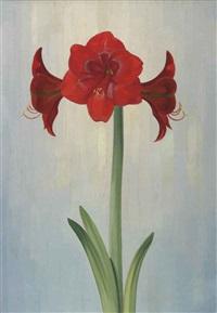 a flowering amaryllis by dirk smorenberg