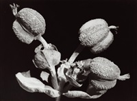 flowers by ernst fuhrmann