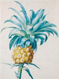 un ananas by jan frans van dael
