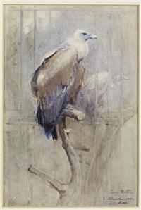tawny vulture by edwin john alexander