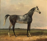 a gray horse in the meadow by alois bach
