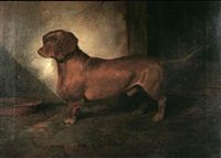 a dachshund by george frederick wright