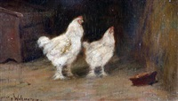 gallinas by jacques witjens
