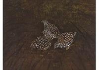 quail by matazo kayama