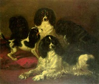 a group of toy spaniels by daniel macdonald