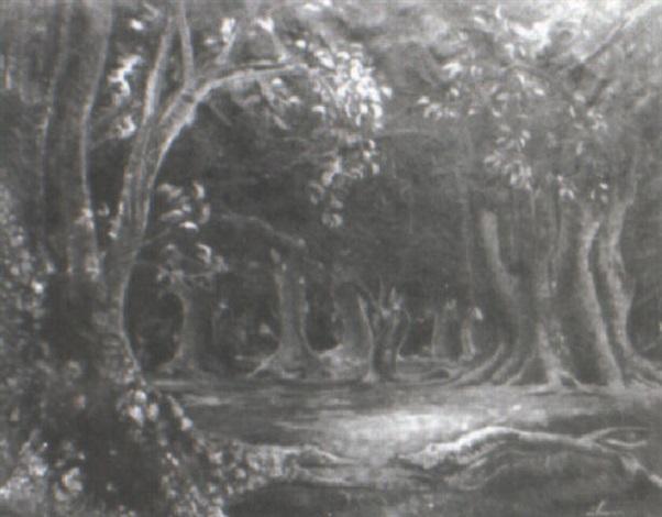 bosque de ombúes rocha by carlos aliseris