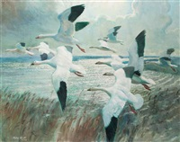 snow geese before the squall by peter markham scott