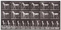 katydid, walking, harnessed to sulky, plate 586,1887 (from animal locomotion) by eadweard muybridge