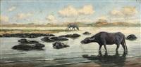 buffalos by hans aescher