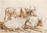 trois études de taureaux, deux couchés by agostino scilla