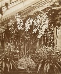 orchids penllergare by john dillwyn llewellyn