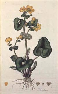 flora londinesis, or plates and descriptions of such plants as grw wild. . . by william curtis