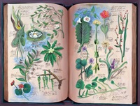 serie botanica antigua by eduardo gualdoni
