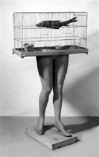 don't touch the bird by hans peter alvermann