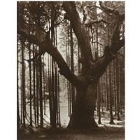 tree study by theodor hilsdorf