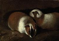 two guinea pigs by sinibaldo scorza