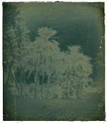 palmiers datiers assouan égypte by joseph philibert girault de prangey