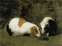 twee cavia's by louis mettling